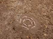 Imre Mariann: Hímzett beton