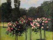 Rózsafák