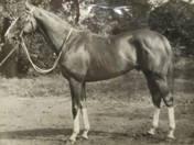 Imperial, a híres galopp ló. 1964