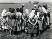 Brigádértekezlet (1958)