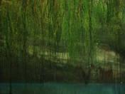 Salix (Fűz)