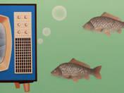 Szomjas halak