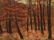 Erdőbelső ősszel