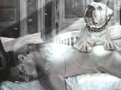 A halott szarvasvadász hűséges, síró kutyája