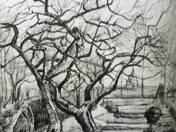 Vincent van Gogh: Trees