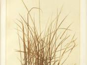 Egy marék fű
