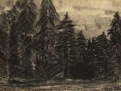 Nagybányai erdő